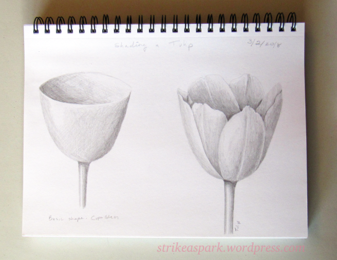 "Tulip Exercise by River on Strike A Spark - exercise from ""Botanical Drawing in Color"" by Wendy Hollender"