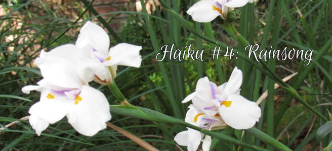 Rain lilies bloom in the sunlight. Cover image for Haiku #4: Rainsong