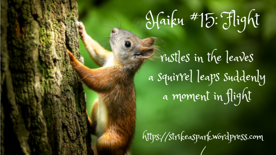 Haiku #15: Flight. rustles in the leaves / a squirrel leaps suddenly / a moment in flight